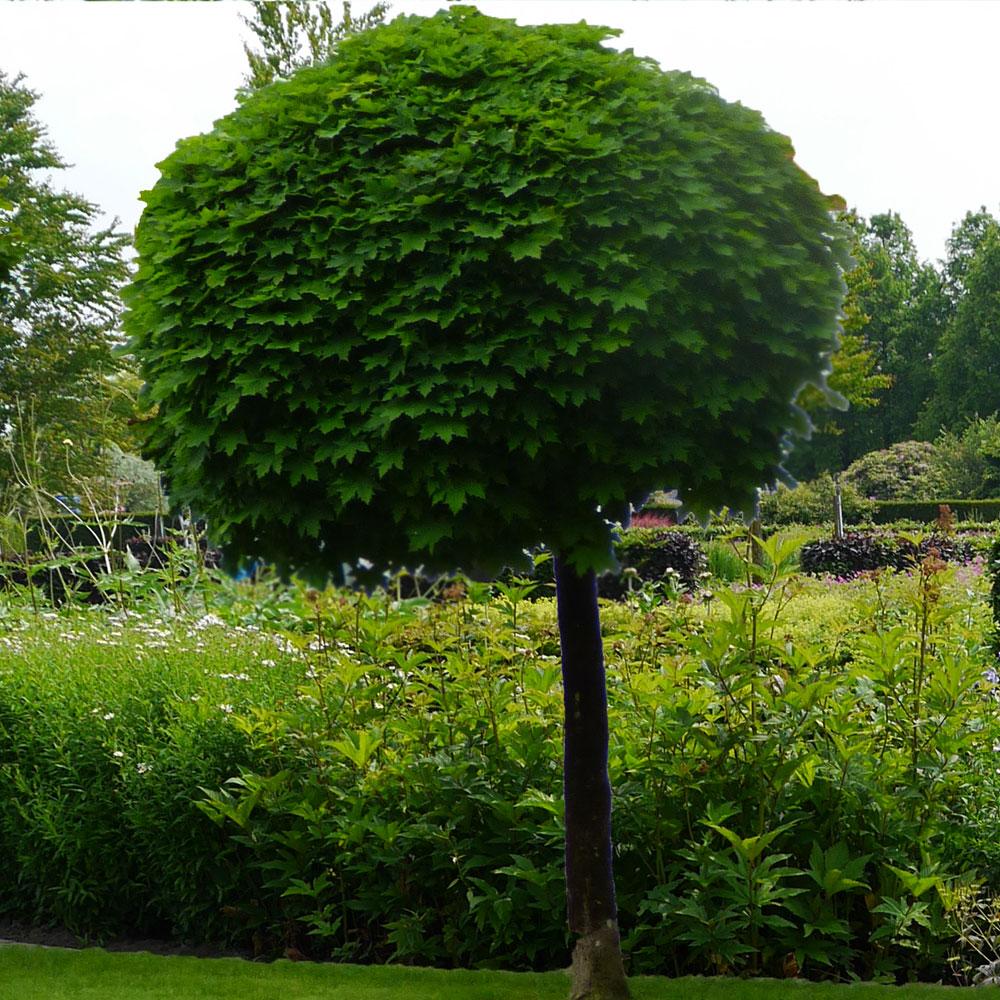 Gartengestaltung modern und pflegeleicht und naturnah 6