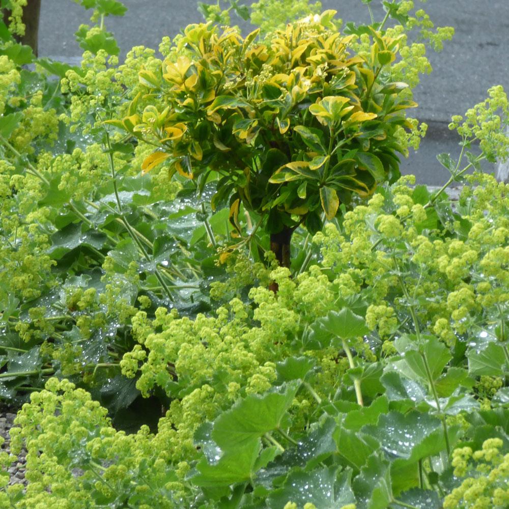 Gartengestaltung modern und pflegeleicht und naturnah 5