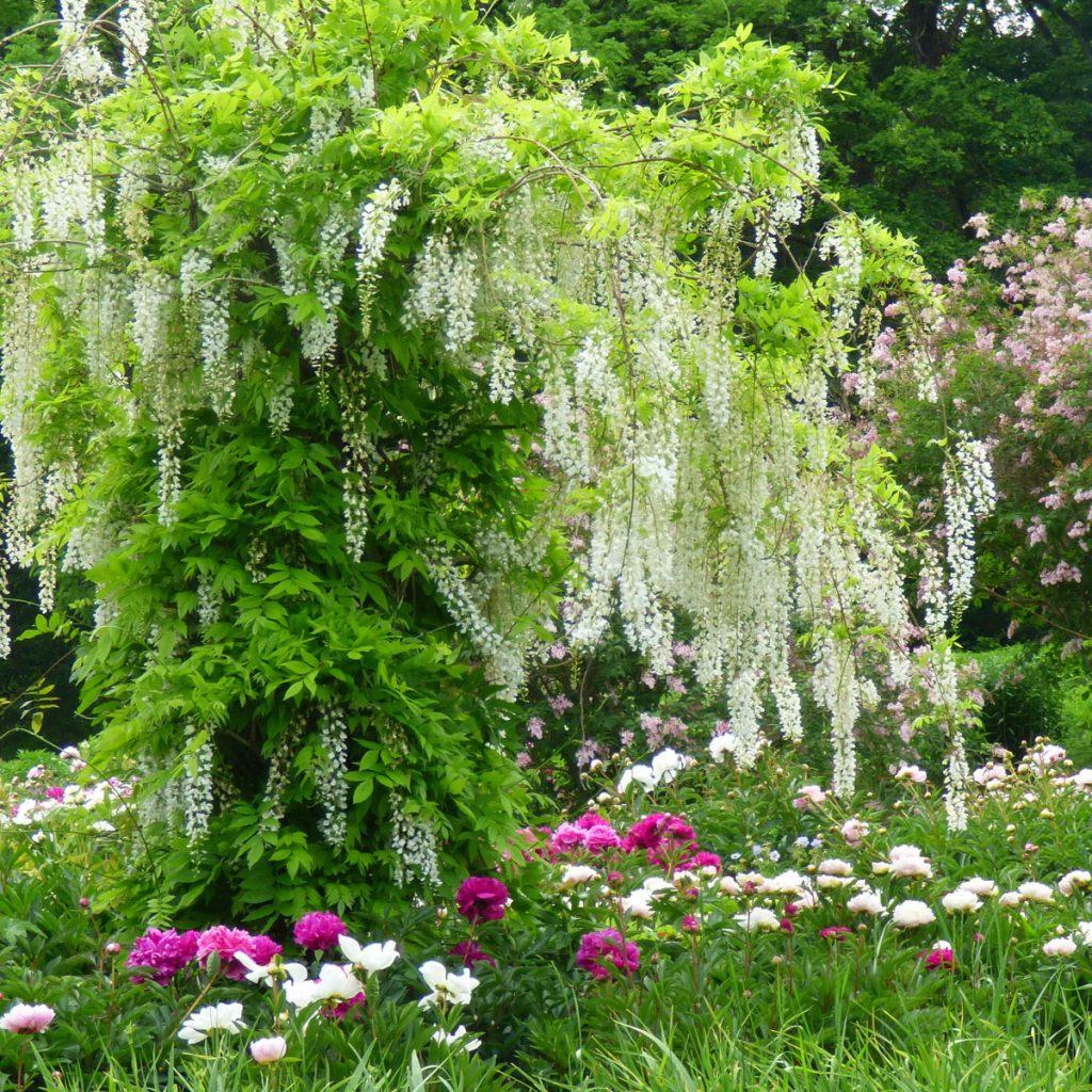 Romantik pur: einen verwunschenen Garten anlegen 2