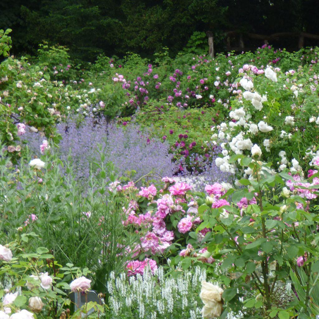 Romantik pur: einen verwunschenen Garten anlegen 14