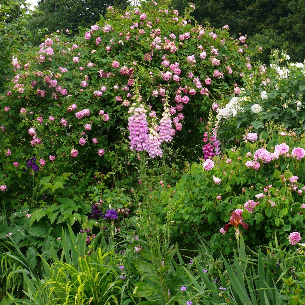 verwunschener Rosengarten