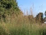 Stauden und Gräser kombinieren - 10 interessante Ideen 21