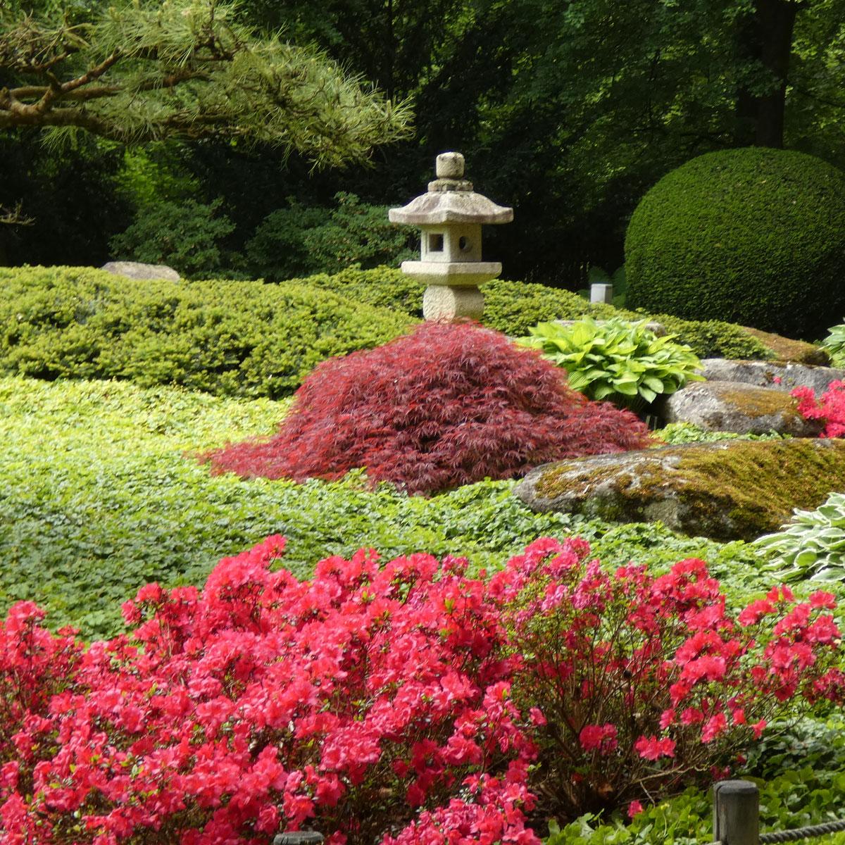 japanische Gärten Azaleenblüte