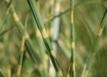 Stauden und Gräser kombinieren - 10 interessante Ideen 19