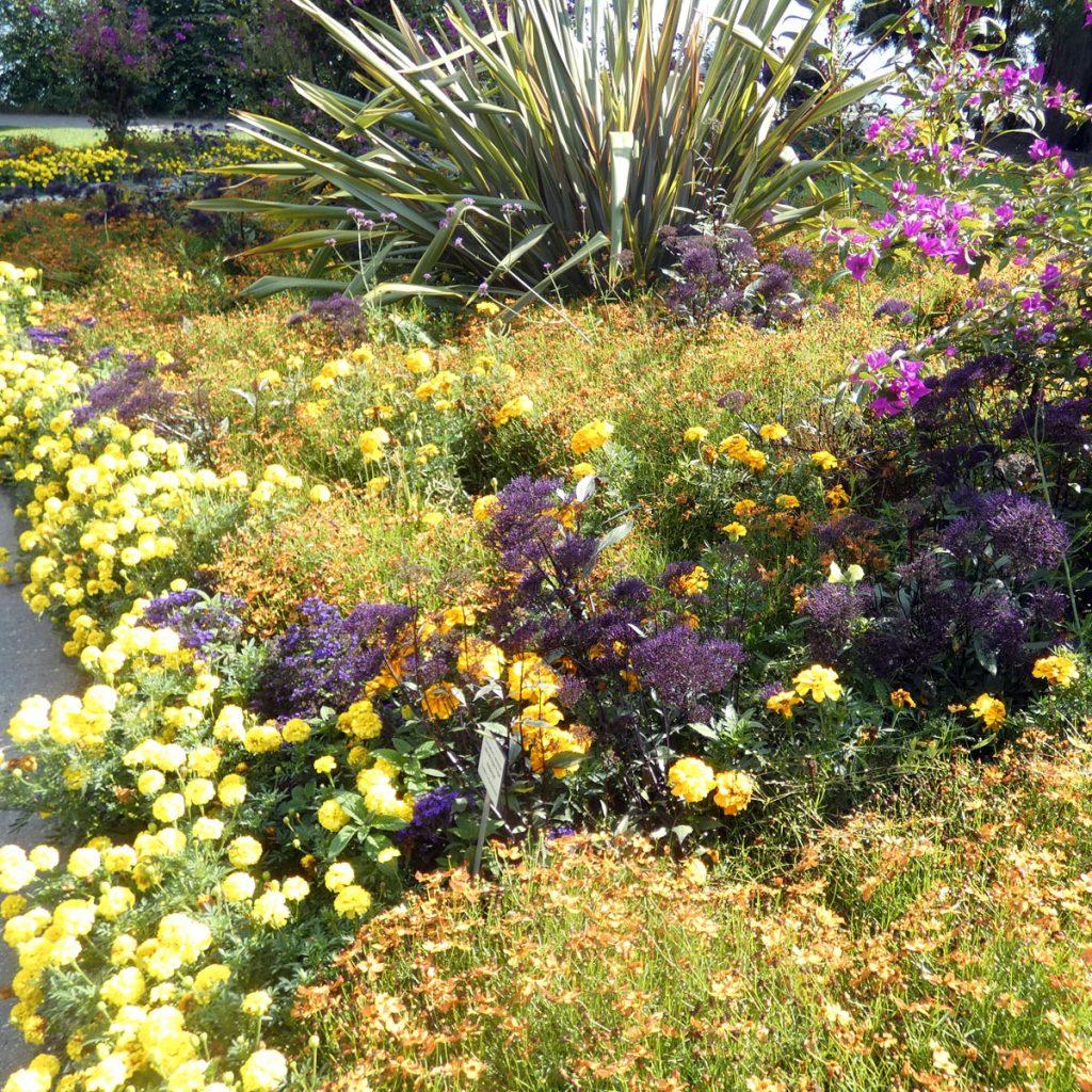 Blumen Farben kombinieren: Gelb, orange, lila