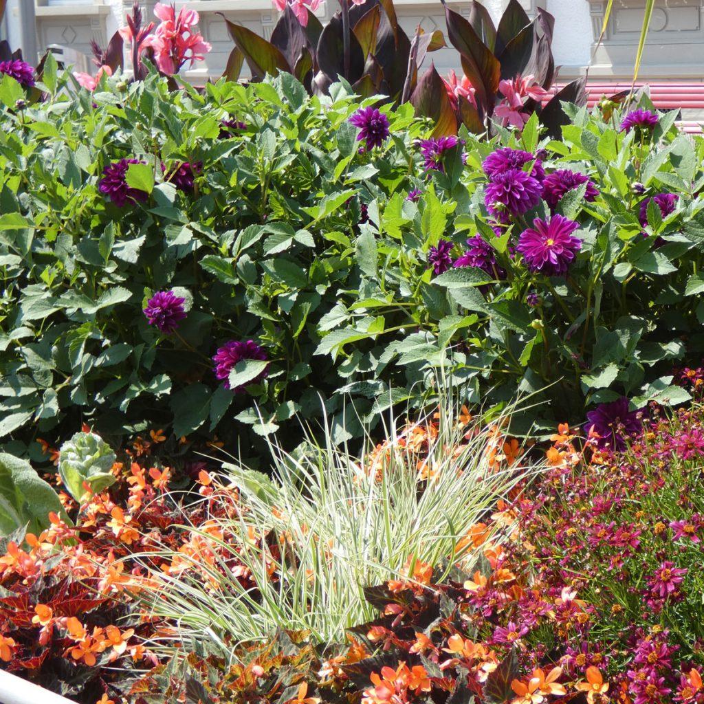 Die Wirkung von Farben im Garten 3