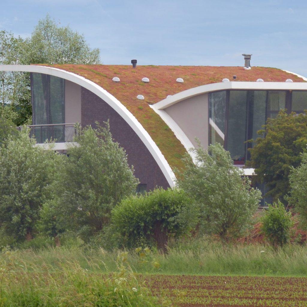 Dachbegrünung-Ideen für mehr Leben auf dem Dach 1
