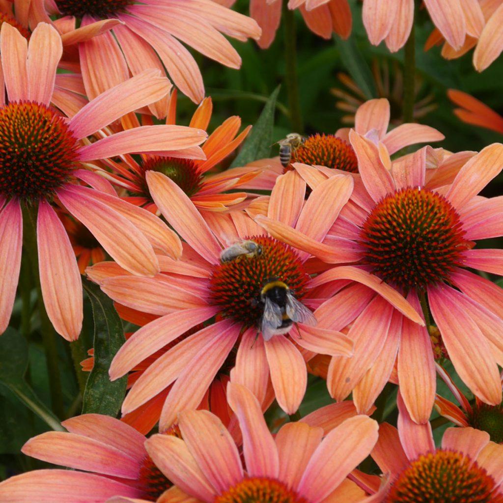 Insektenfreundliche Pflanzen: Was Bienen, Hummeln & Co wirklich schmeckt 9