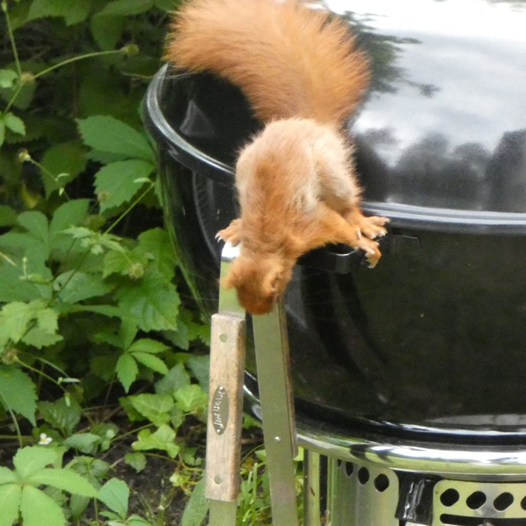 Eichhörnchen: niedlich - ja, aber auch nützlich? 5