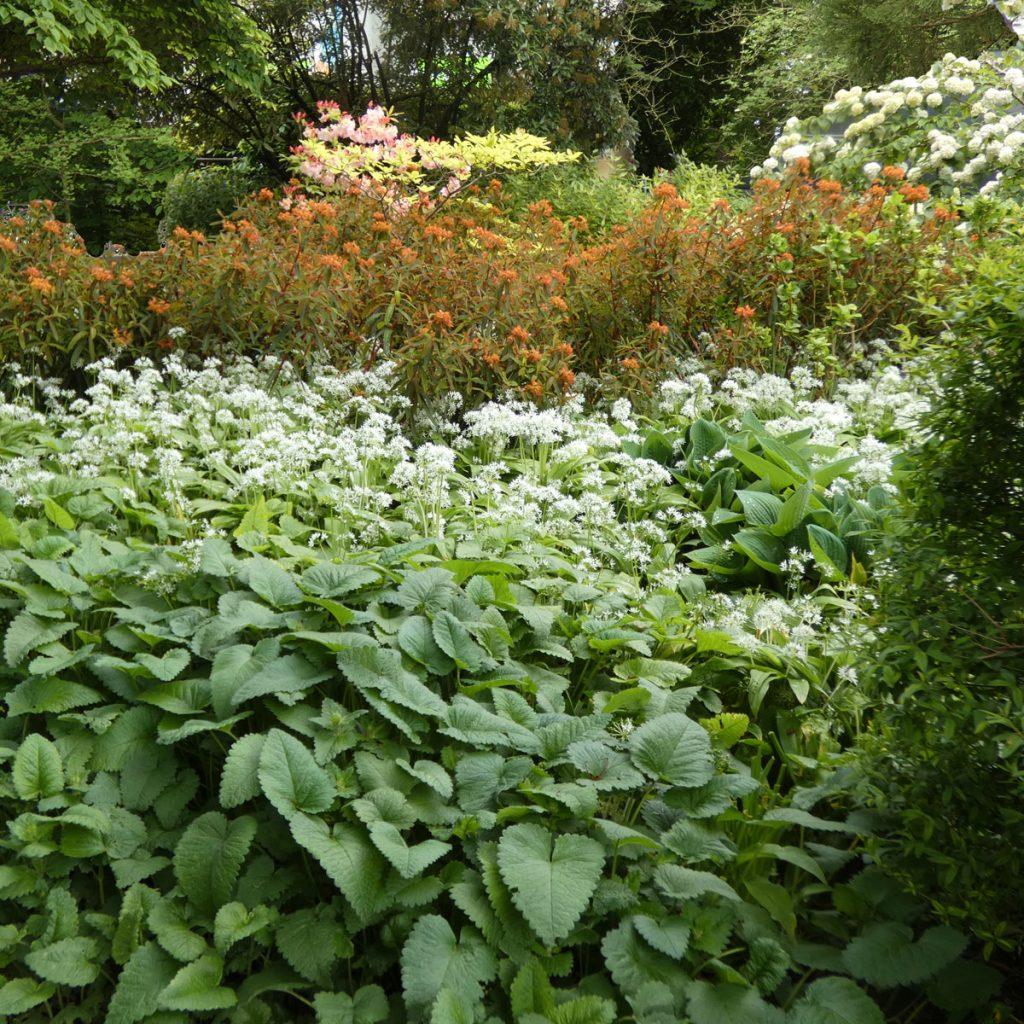 Wie der Wald in die Stadt kommt: Waldgarten und Tiny Forest 22