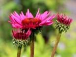 Insektenfreundliche Pflanzen: Was Bienen, Hummeln & Co wirklich schmeckt 4
