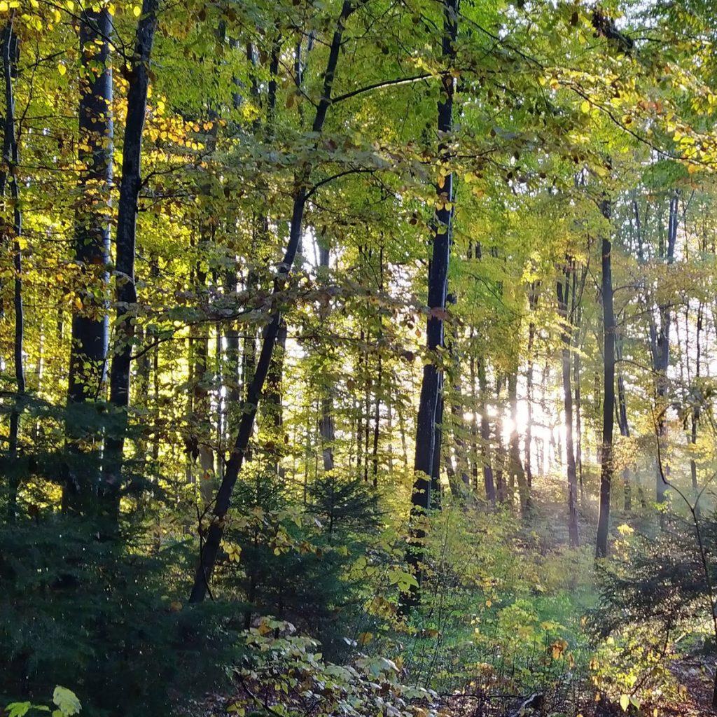 Wie der Wald in die Stadt kommt: Waldgarten und Tiny Forest 29
