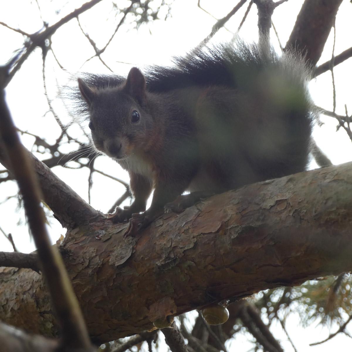 Eichhörnchen auf den Balkon locken – 3 wichtige Tipps 1