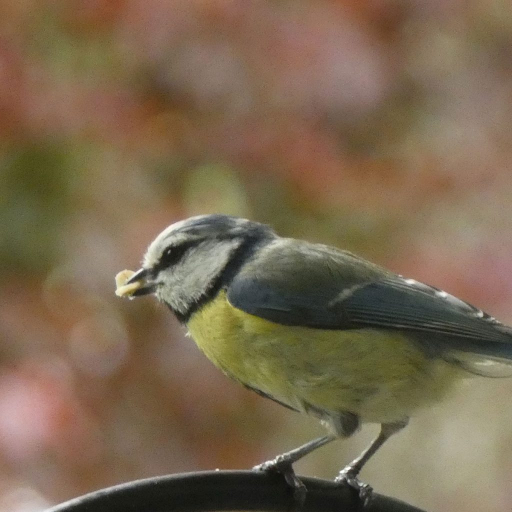 Gartenarbeit im Herbst: Was Sie jetzt für die Tierwelt tun können 2