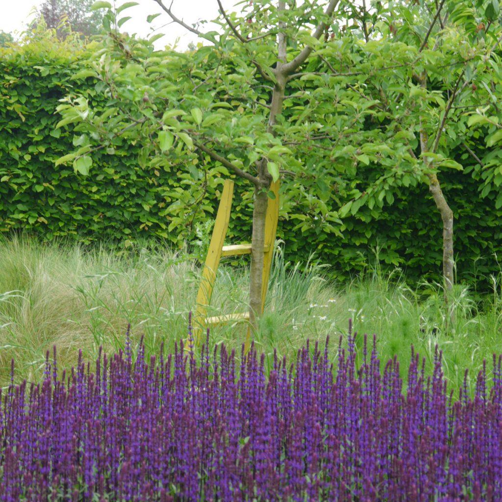 Obstbäume für kleine Gärten 1