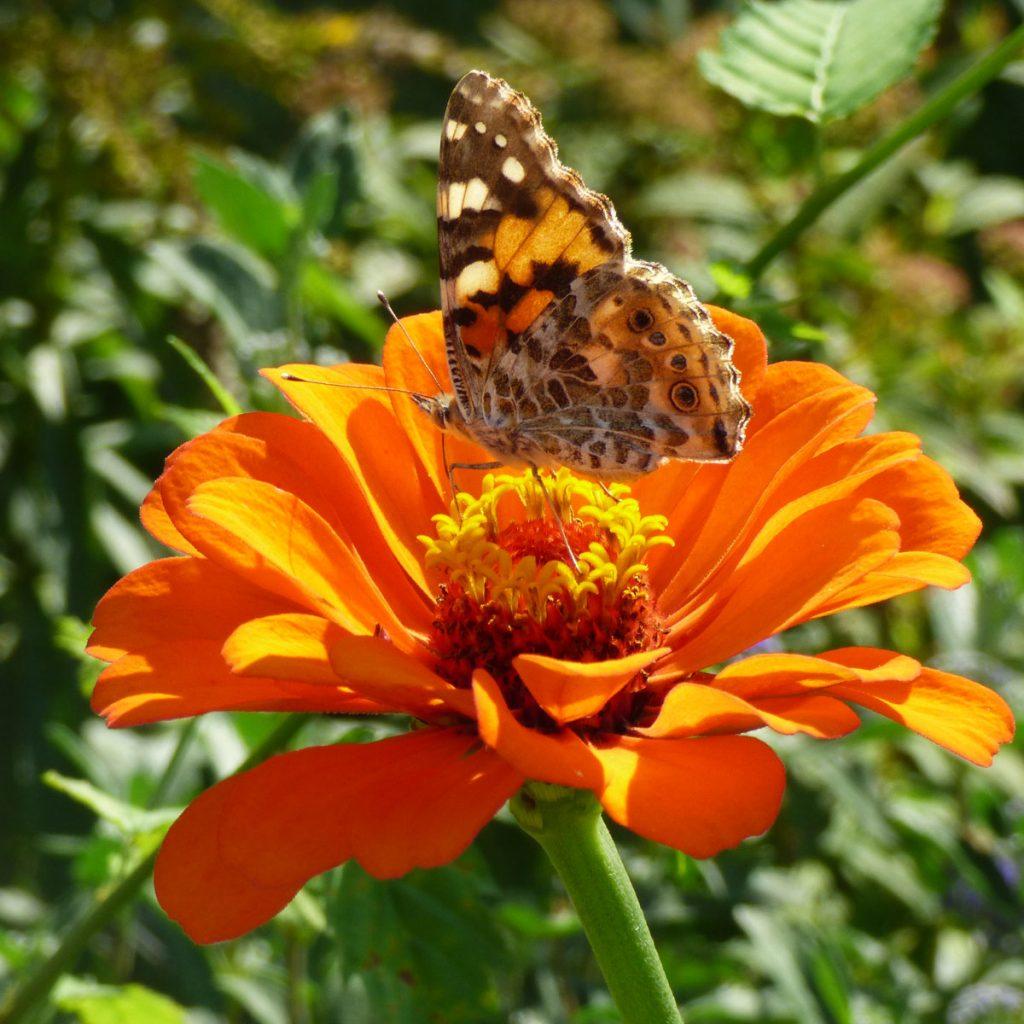 Gartenarbeit im Herbst: Was Sie jetzt für die Tierwelt tun können 10