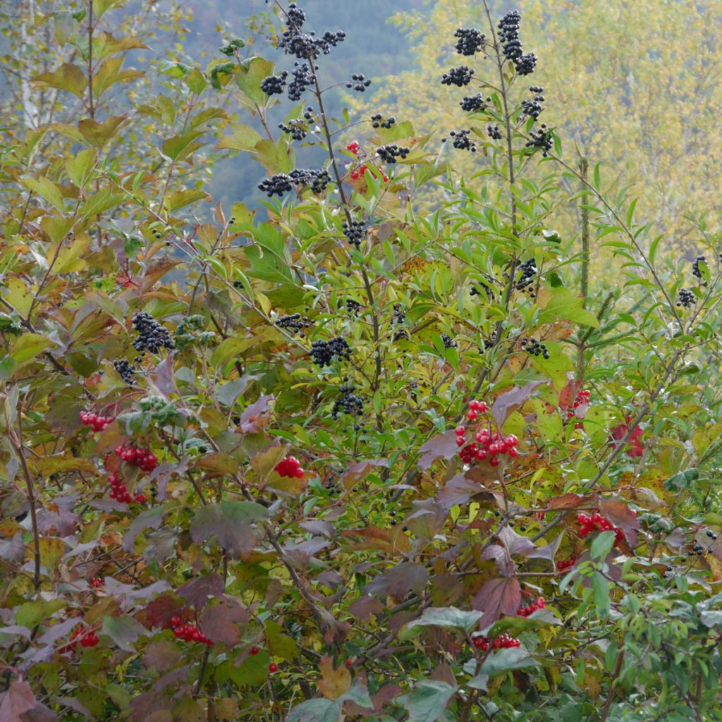 Gartenarbeit im Herbst: Was Sie jetzt für die Tierwelt tun können 4