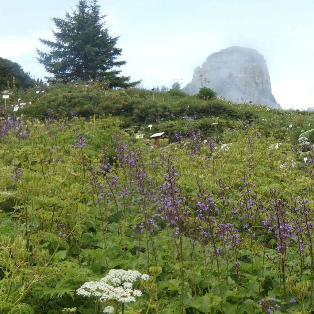 Alpengarten anlegen: Ideen für einen ganz besonderen Steingarten 3