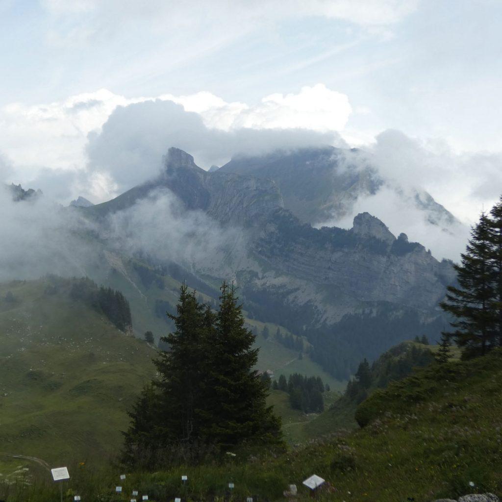 Alpengarten anlegen: Ideen für einen ganz besonderen Steingarten 4