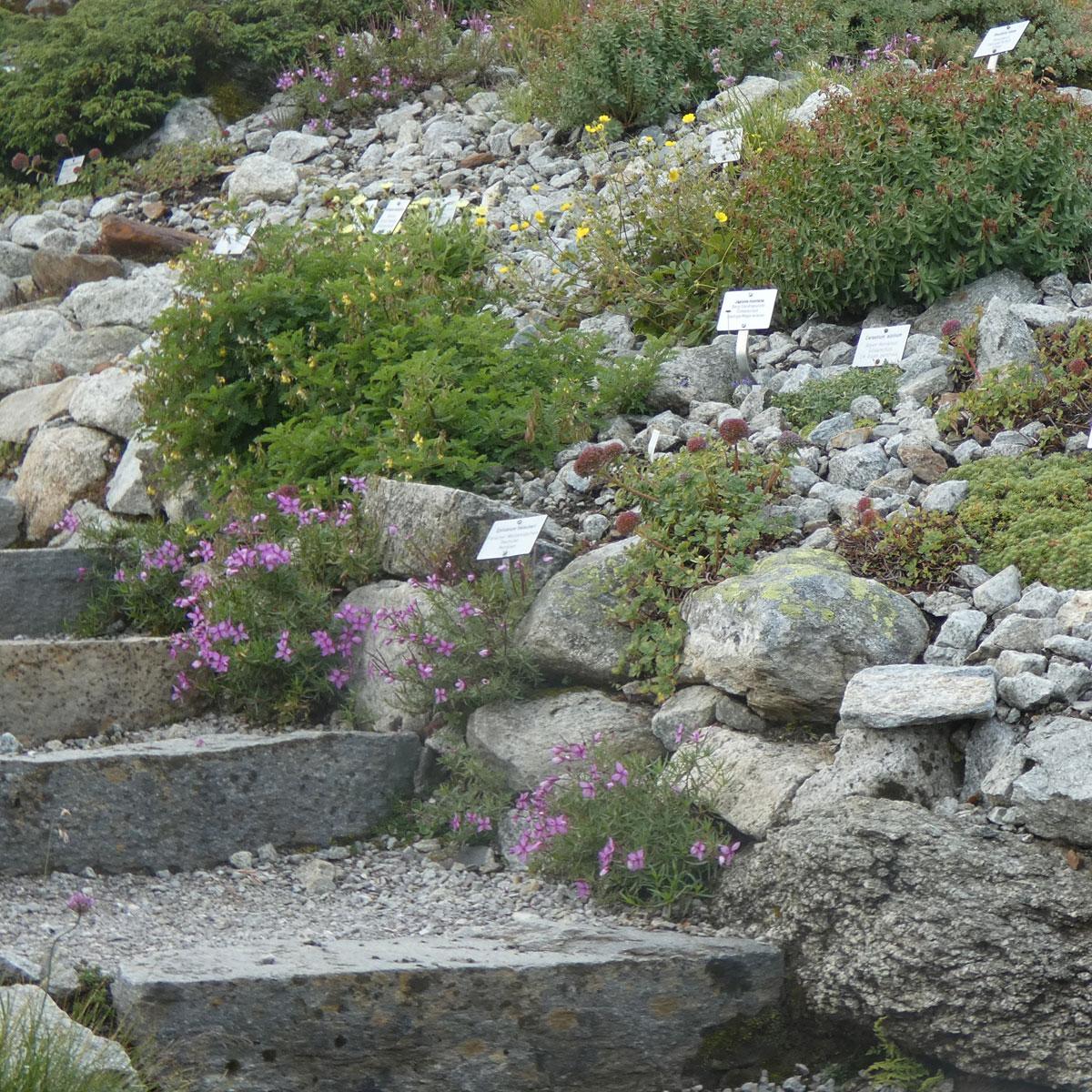 Alpengarten anlegen