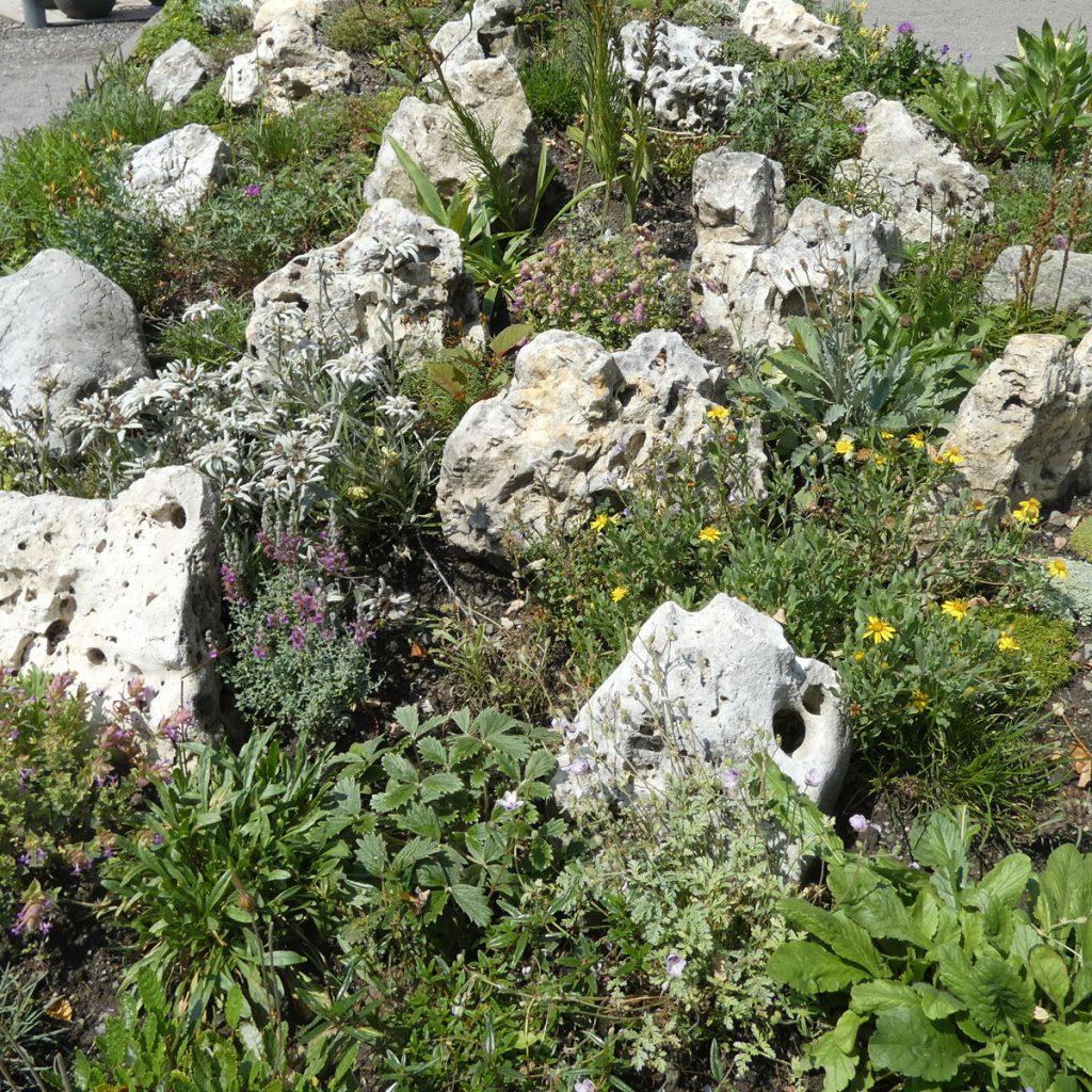 Alpengarten anlegen: Ideen für einen ganz besonderen Steingarten 5